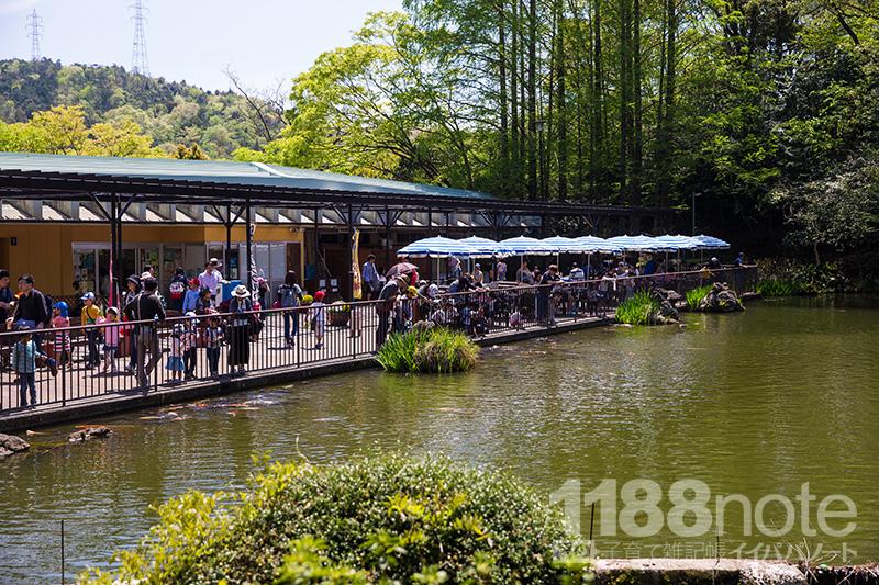 安佐動物公園の池