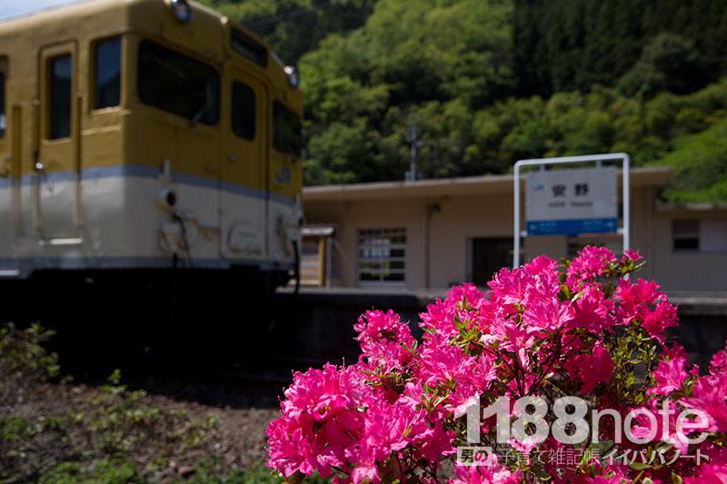 安野 花の駅公園に咲くツツジ
