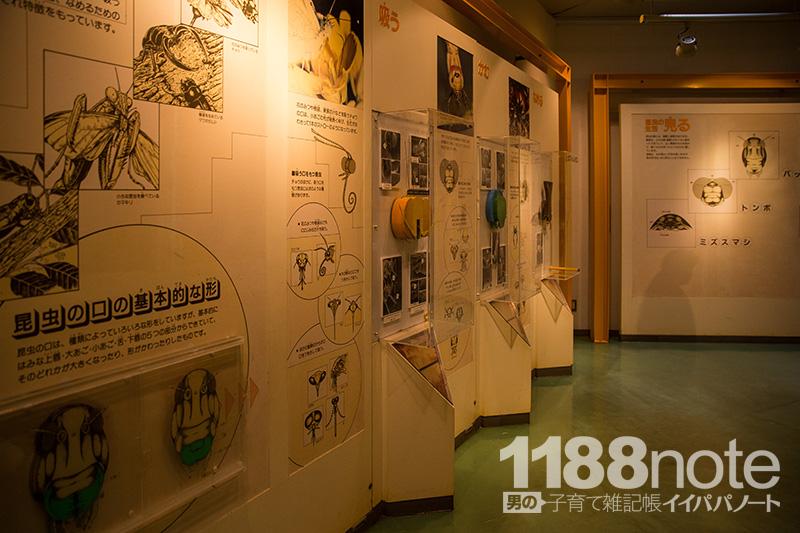 広島市森林公園 昆虫館の展示