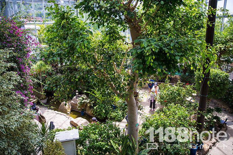 広島市森林公園 昆虫館 パピヨンドームの中