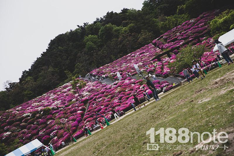 広島市森林公園のつつじ
