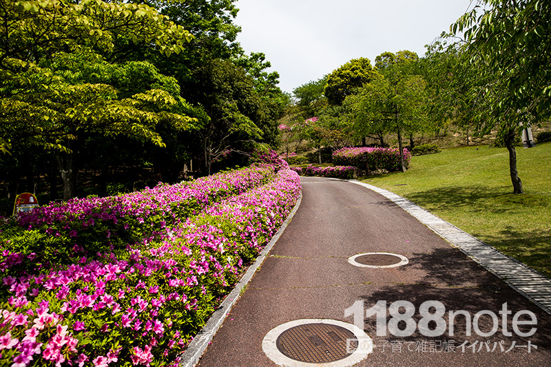 広島市森林公園の坂道