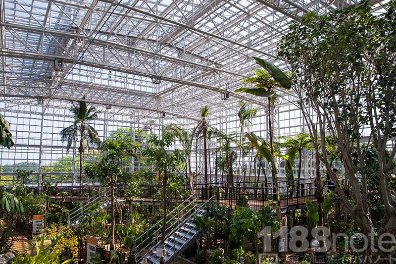 広島市植物公園の大温室