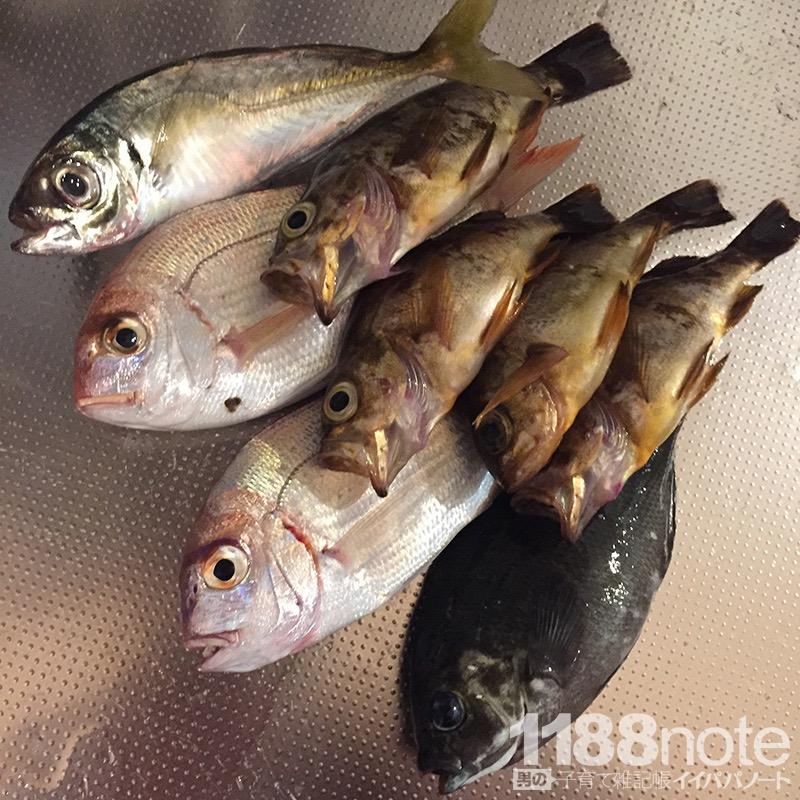 上関の漁港での釣果