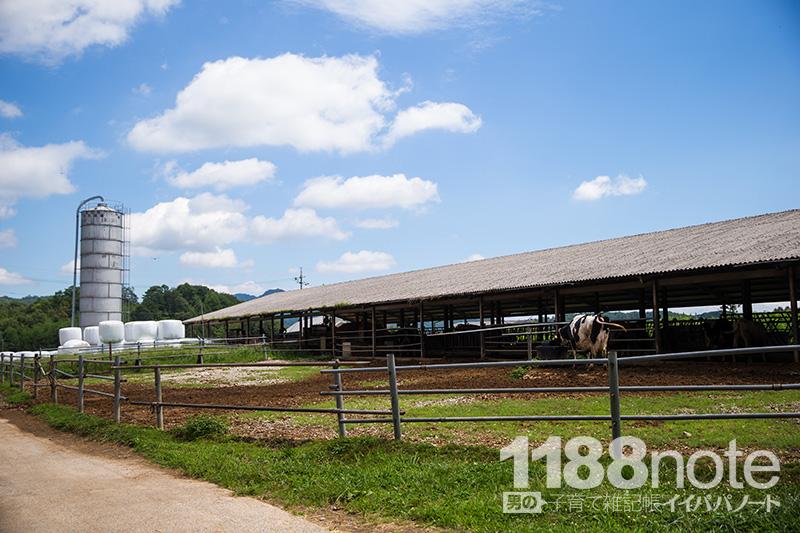 久保アグリファームの牛舎
