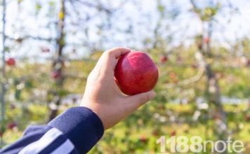 果実の森公園のりんご