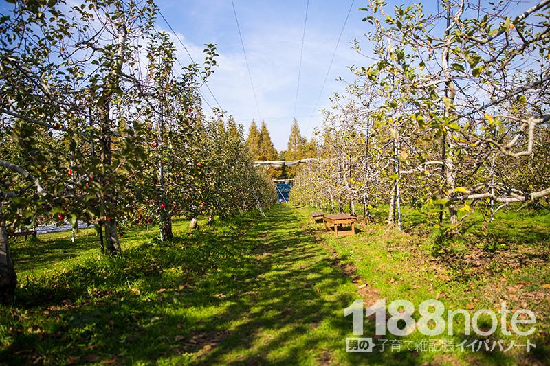 広島県三原市果実の森のリンゴ狩り