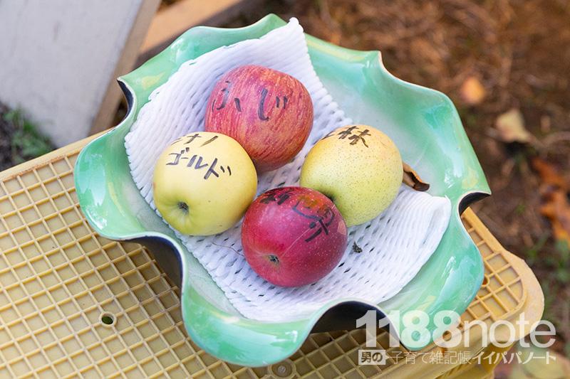 広島県三原市果実の森で収穫可能なリンゴ