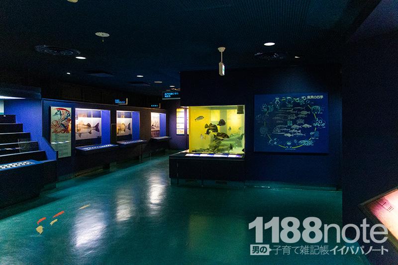 広島市水産振興センター第一展示室