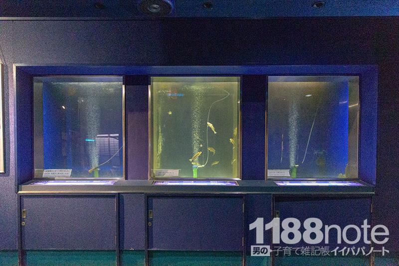広島市水産振興センターの水槽